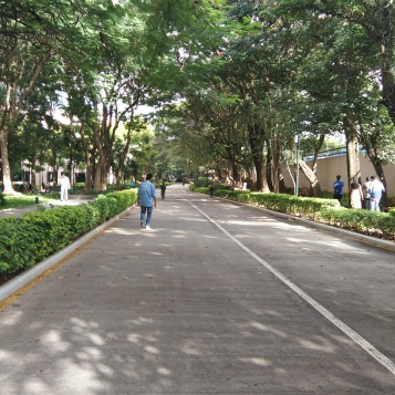 The beautiful tree lined walkways inside the campus
